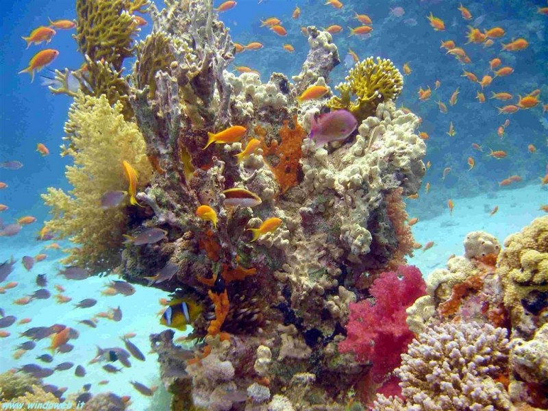 The Beauty of The Red Sea