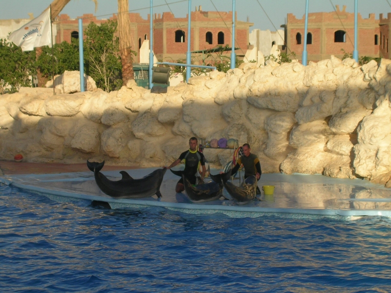 Dolphin Show in Sharm, Red Sea