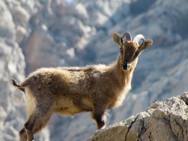 Wadi Sireen Reserve Oman