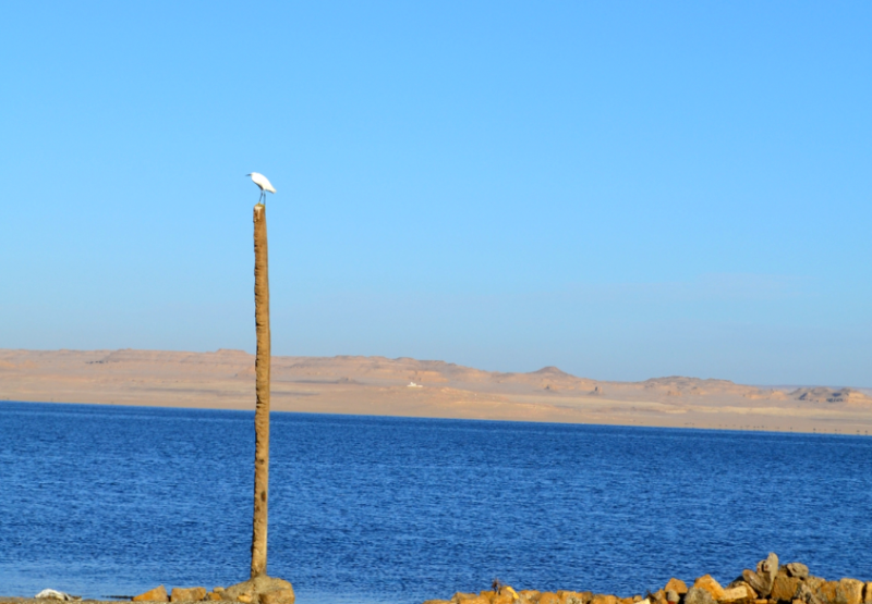 Lake Qarun View, Fayoum