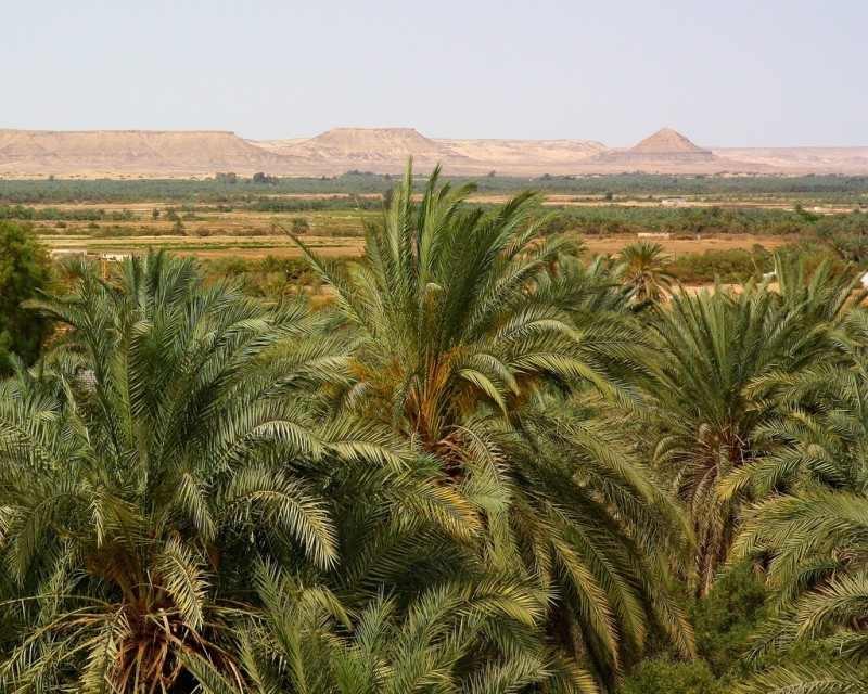 The Bahariya Oasis