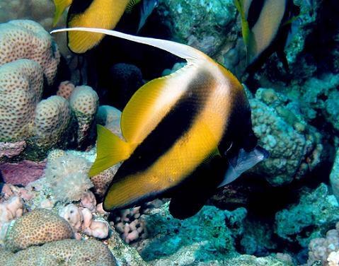 Coral Reefs Underwater