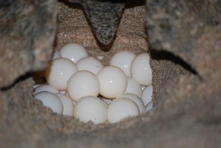 Observation des tortues 2 jours