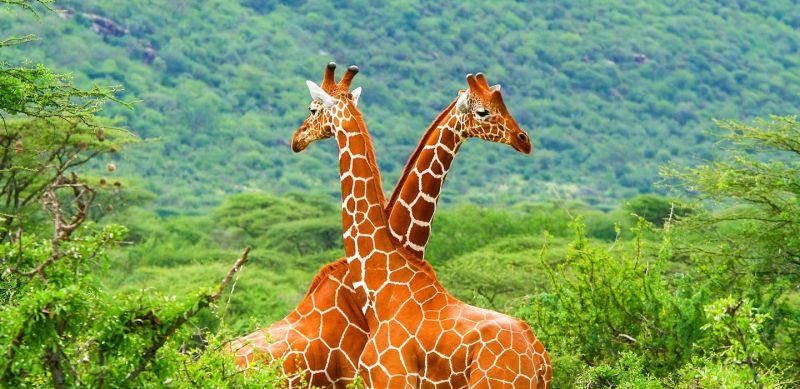 Ruma National Park Guide