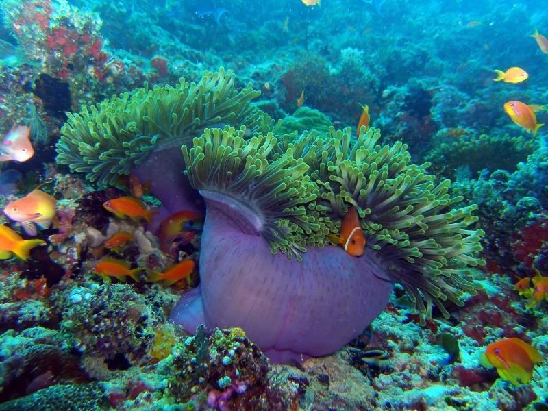 The marine life