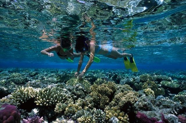 Snorkeling a Marsa Alam