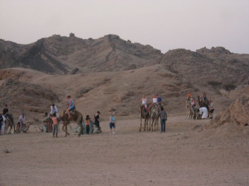 Camel Ride Adventure in Sharm