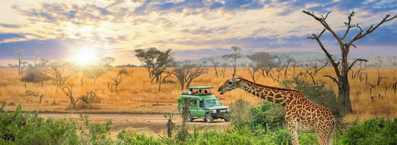 Serengeti National Park Guide
