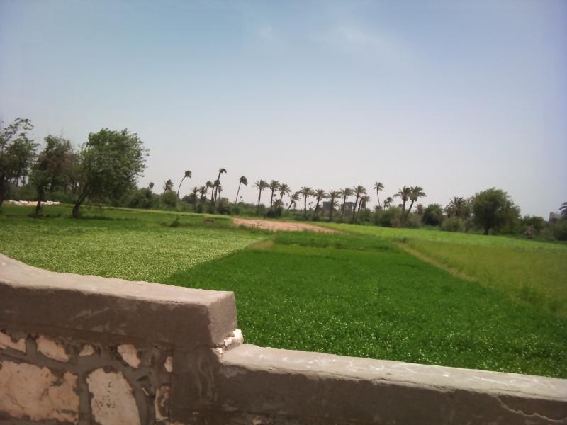 El Fayoum Green Farmlands