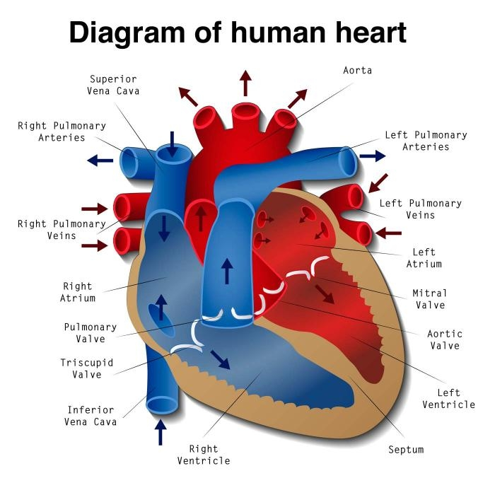 What does open heart surgery mean off pump heart surgery ccuart Choice Image