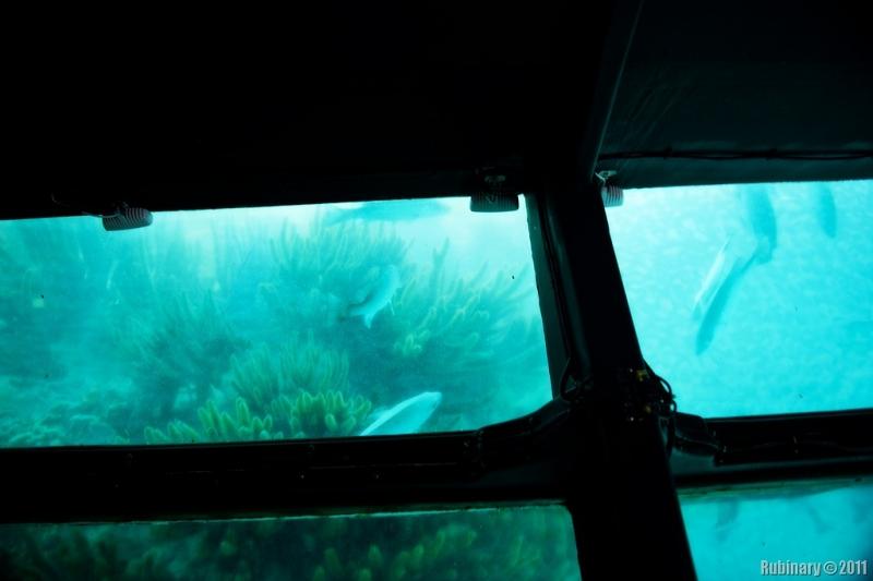 Passeio no Barco de Vidro