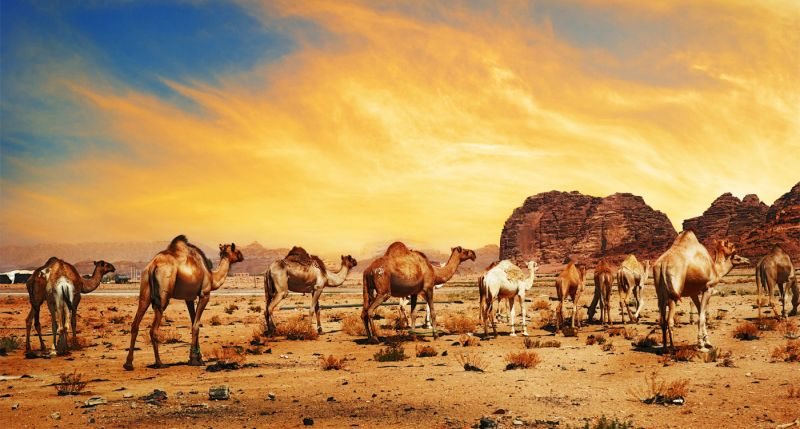 Il deserto Wadi Rum