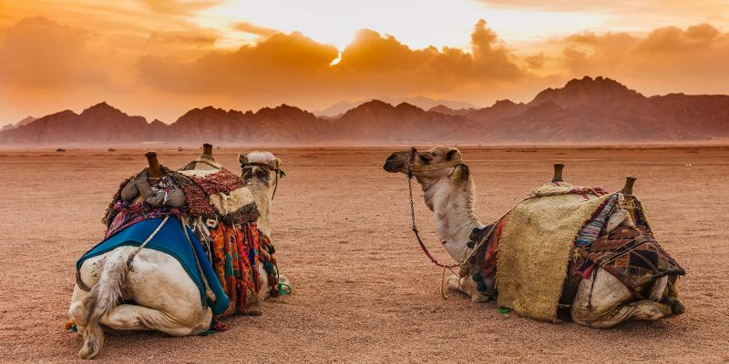 Out and About the Sinai Peninsula