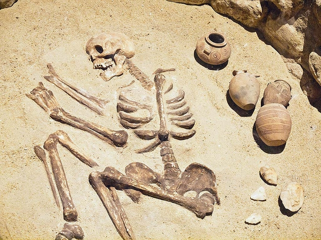 A Skeleton at the Nubian Museum