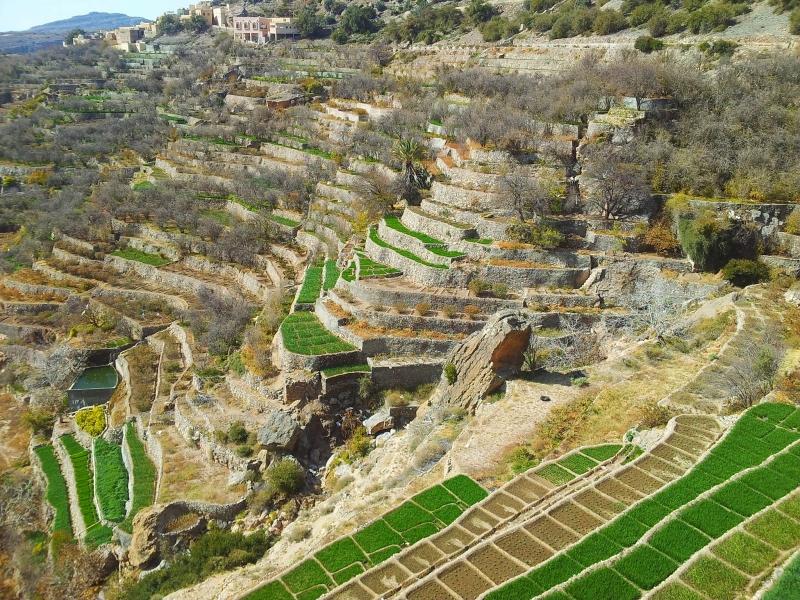 Jabal Akdhar