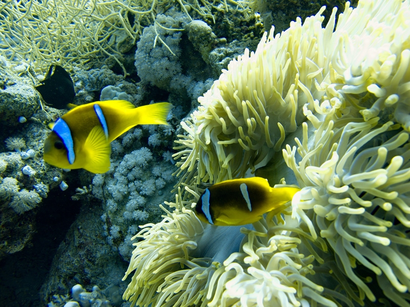 Corals in Sharm