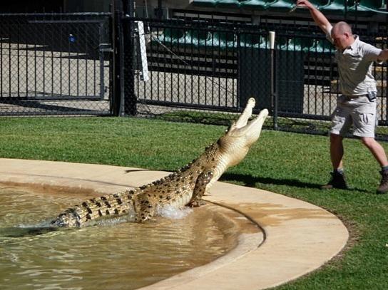 Ausflug zur Krokodil- und Schlangenshow