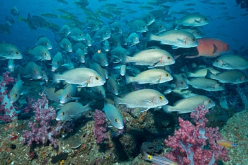 Isole Al Hillaniyat of Oman