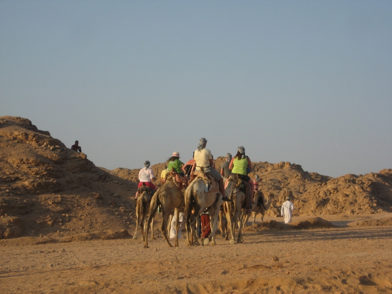 Camel Ride in the Bedouin Village, Sinai