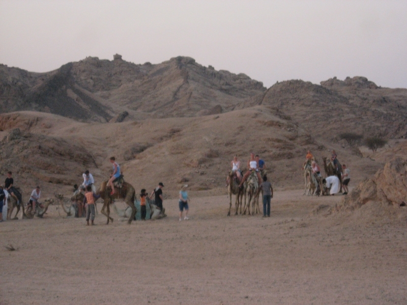 Camel ride Trip in Sharm El-Sheikh