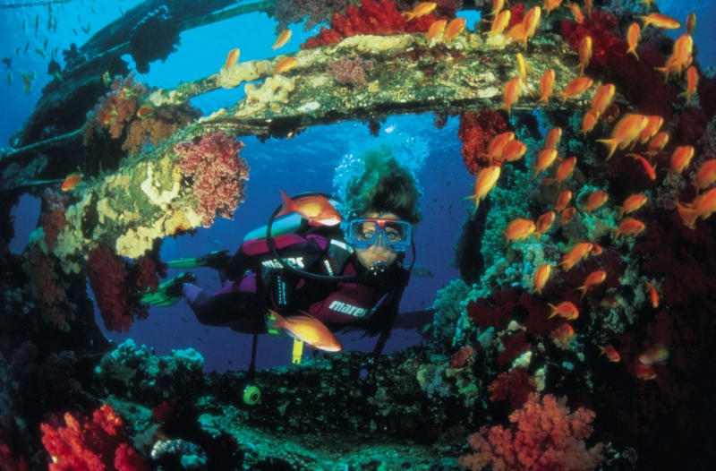 Diving in the Red Sea, Sharm El Sheikh