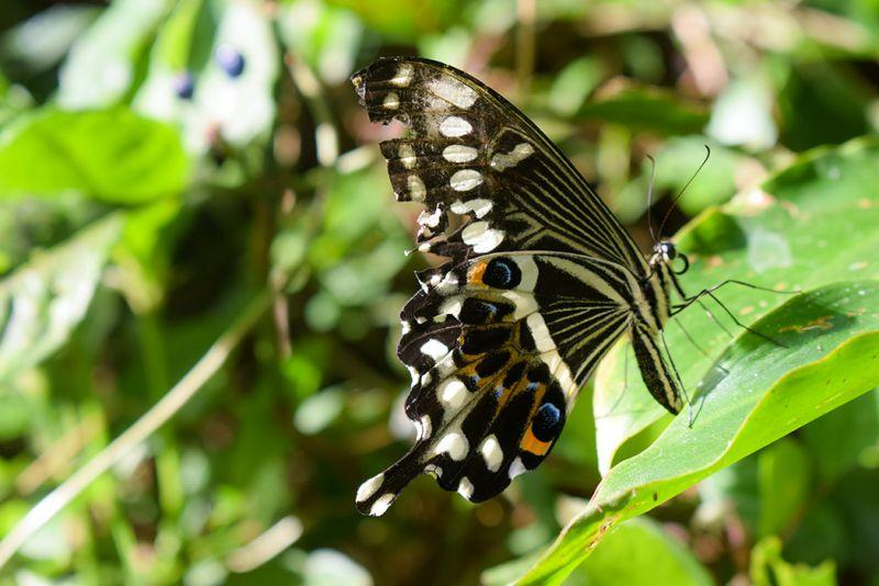 Discover Kakamega Forest