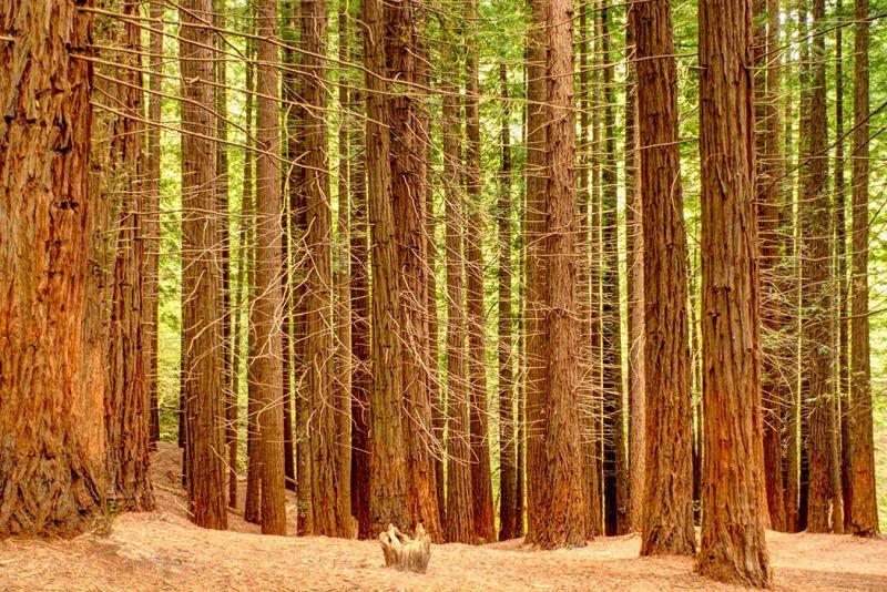 11 Bosques Hermosos Que Parecen Sacados De Un Cuento De Hadas Memphis Tours