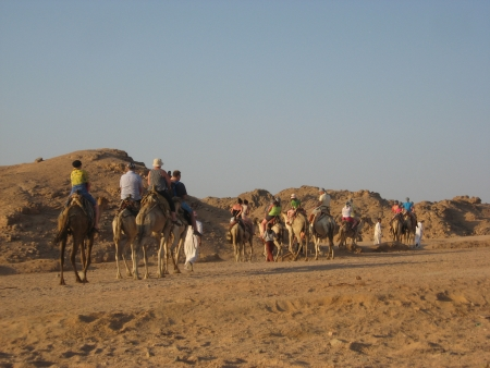 Camel Back Riding in Sinai Desert