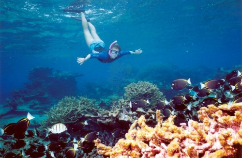 Mergulho em mar vermelho