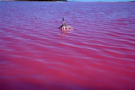 Pink Lagoons of Oman