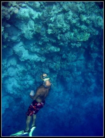 Schnocheln in Tiran Insel