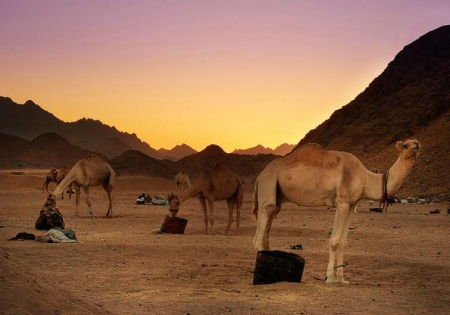Bedouin Safari in the Red Sea