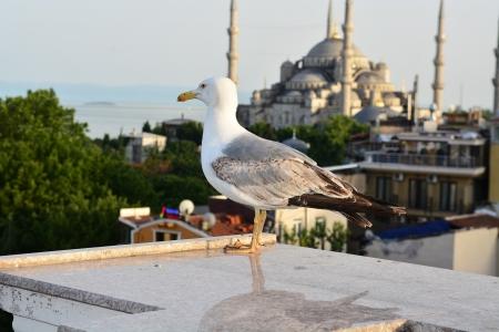 A Mesquita Azul