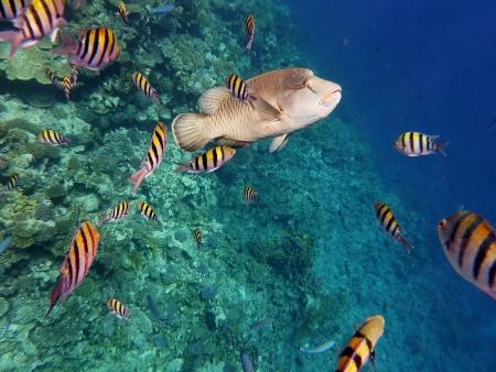 紅海のいろいろな魚、アカバ、ヨルダン