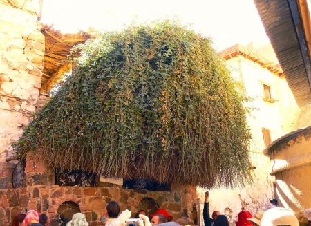 The Burning Bush inside St. Catherine Monastery, Sinai