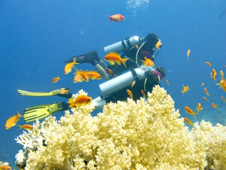 Diving Experience in Sharm