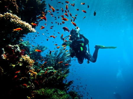 Diving in Red Sea - Hurghada, Egypt