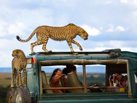 Kenya Cheetah Trek Safari
