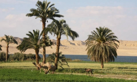 Lake Qarun View from Tunis Village, Fayoum