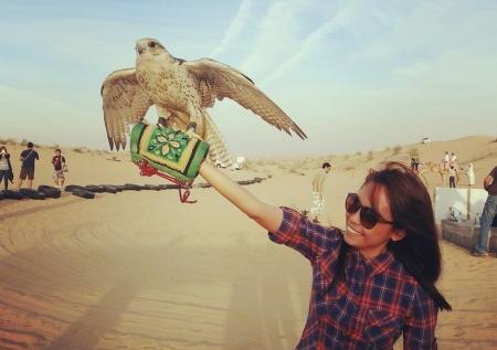 Falconry Experience