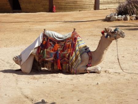 Escursione Cammellata a Hurghada da Safaga