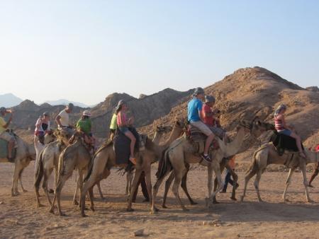 paseo por camello en el desierto