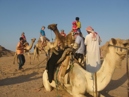 Camel Back Riding in Sharm Desert