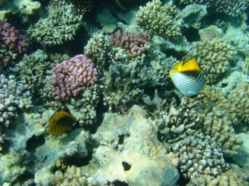 Colored Coral Reefs in The Red Sea