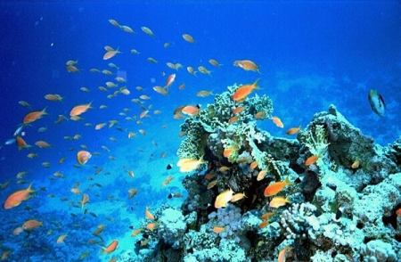 Red Sea, Egypt