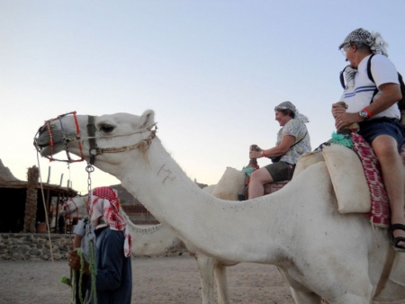 Camel Ride in Sinai Desert