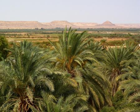Die Bahariya Oase