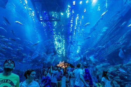 Aquário e zoológico marinho - Dubai