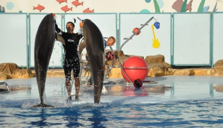 Dolphins Show at Hurghada, Red Sea