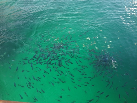 Enjoy See thousands of fishes
